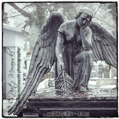 Opus Angeli
